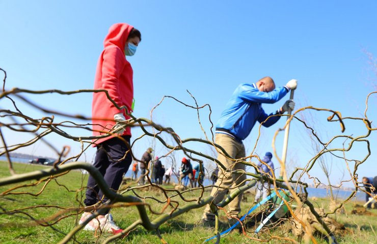 Metinvest's enterprises and Metinvest Green Center planted 400 trees in Zaporozhye as part of Greening the Planet eco-initiative